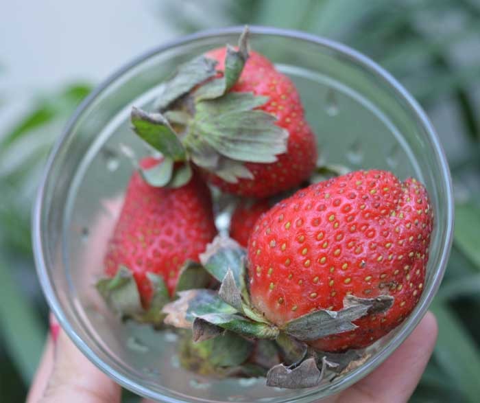 Strawberry Oats Smoothie Recipe